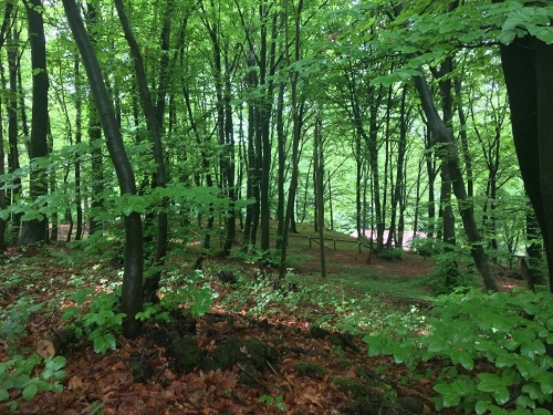 The beautiful beech forests which we trained in. The terrain of the races wasn't quite this nice.